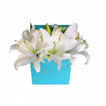 Box Tiffa Liliums