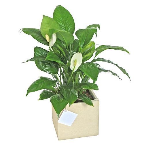 Envio de plantas a domicilio plantas de interior y - Macetas para plantas de interior ...