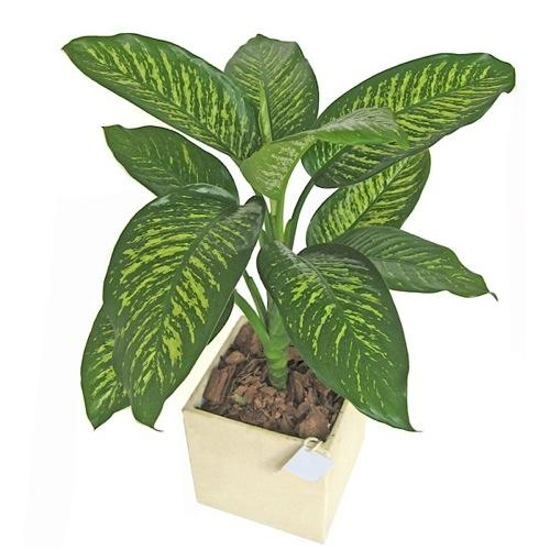 Image gallery imagenes de plantas - Plantas ornamentales de interior ...