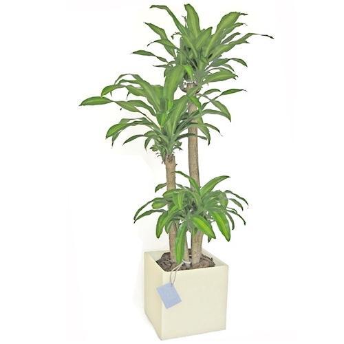 Envio de plantas a domicilio plantas de interior y for Plantas de exterior