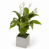 Envío de Plantas