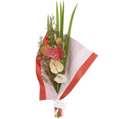Envio de Flores , Ramo de Anthurium