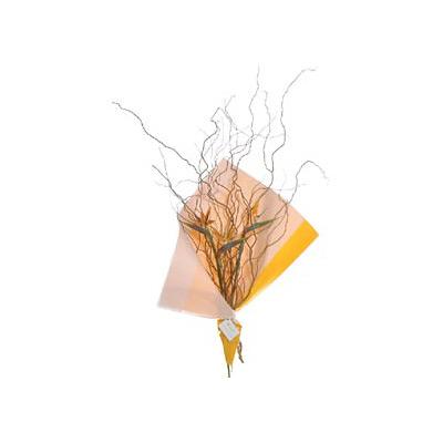 Envio de Flores , Ramo de Strelitzias